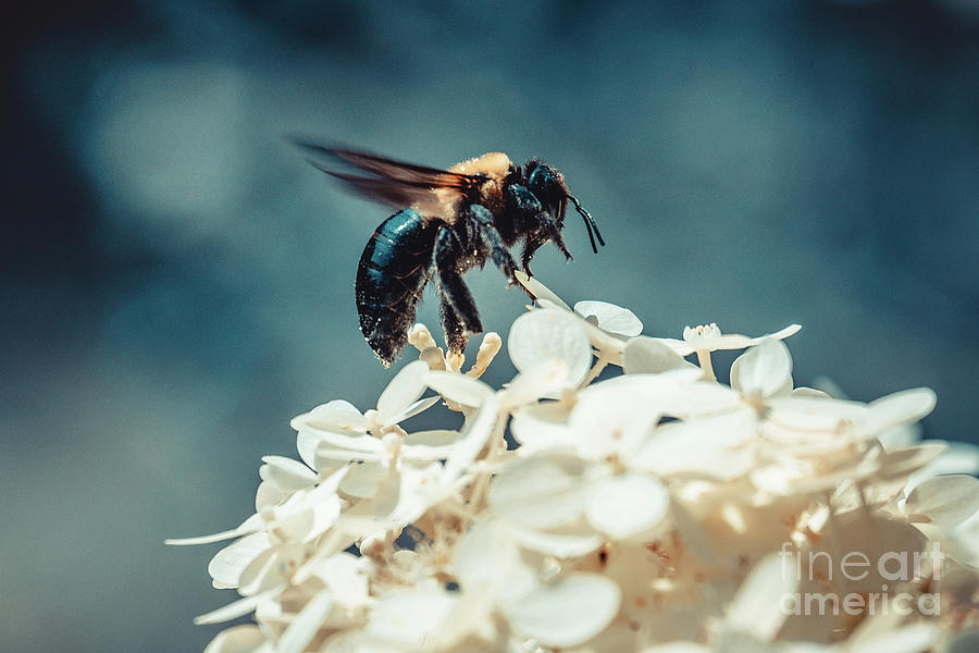 Lift-Off. Bee Photograph by Stephen Geisel