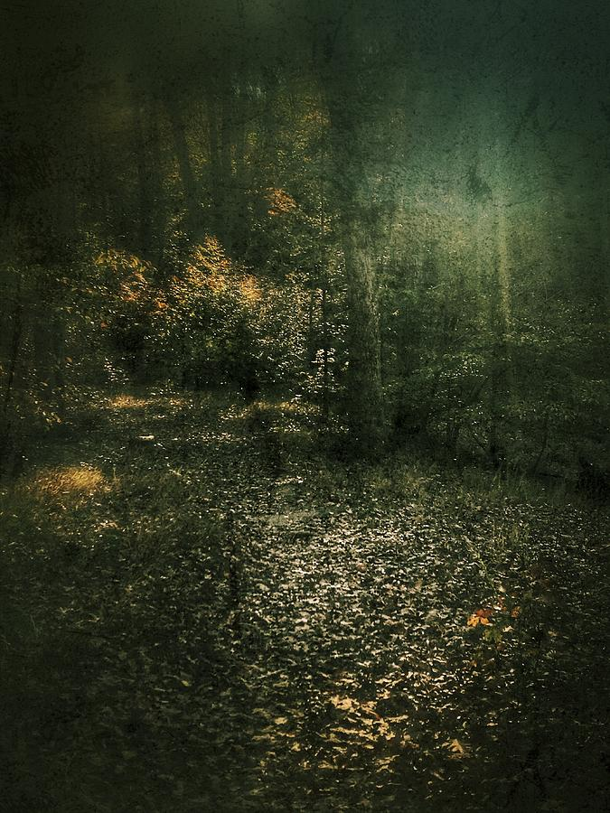 Light in Autumn Forest by Amy Sorvillo