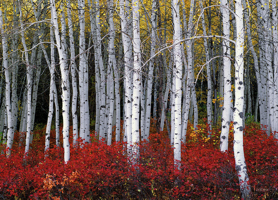 Utah Photograph - Light in Forest by Leland D Howard
