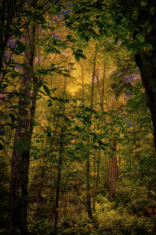 Light in the Forest by David Patterson