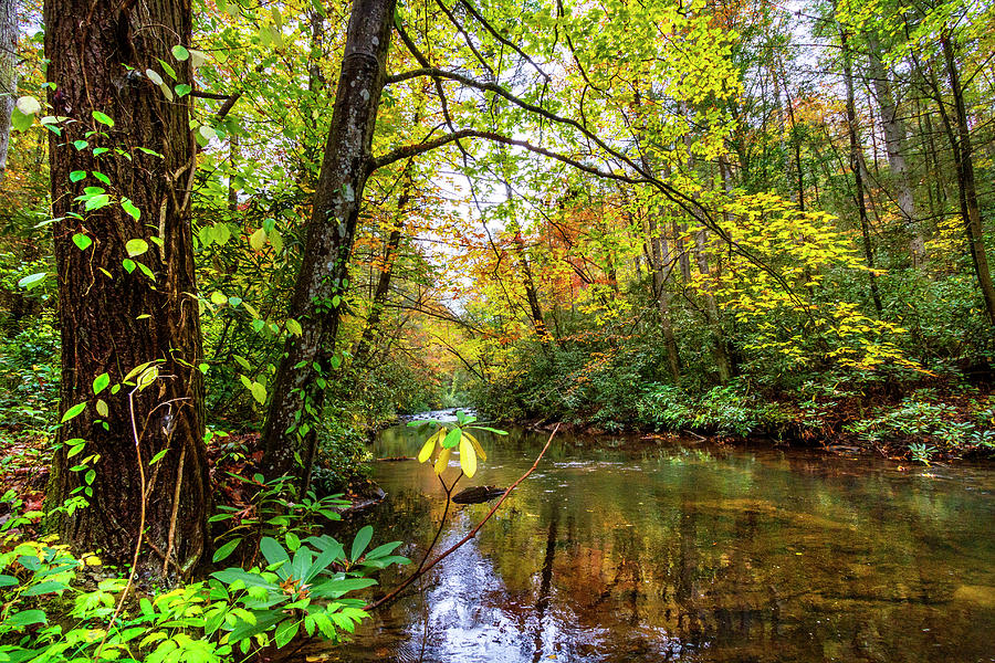 Cherokee Photograph - Light On The Stream by Debra and Dave Vanderlaan