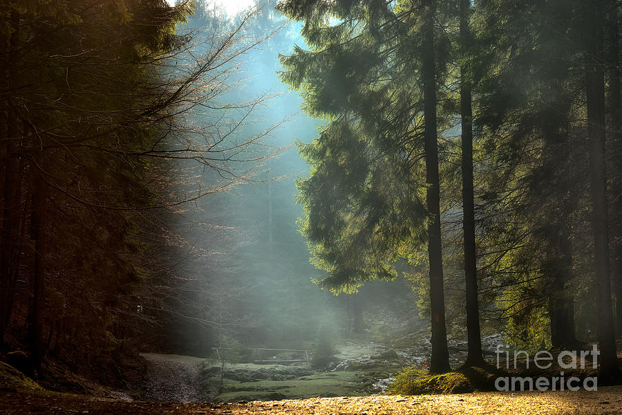 Forest Photograph - Light Rays Through The Trees . Late by Hurghea Constantin