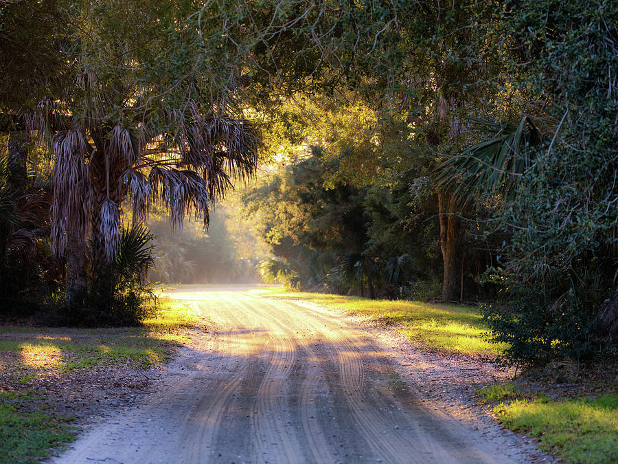 Light, Shadows and an Old Dirt Road by Donnie Whitaker