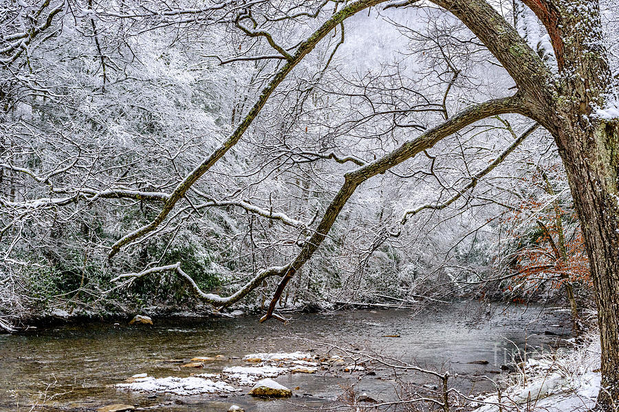 Light Snow on Cranberry River by Thomas R Fletcher