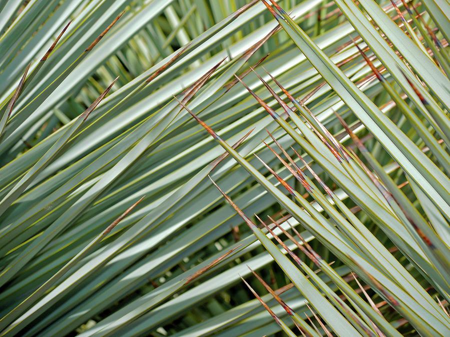 Blue Yucca Photograph - Light Touch 4 by Lynda Lehmann