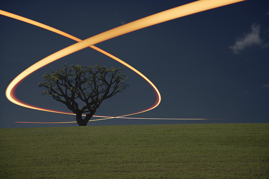 Light Trails Around Tree Photograph by Paul Taylor