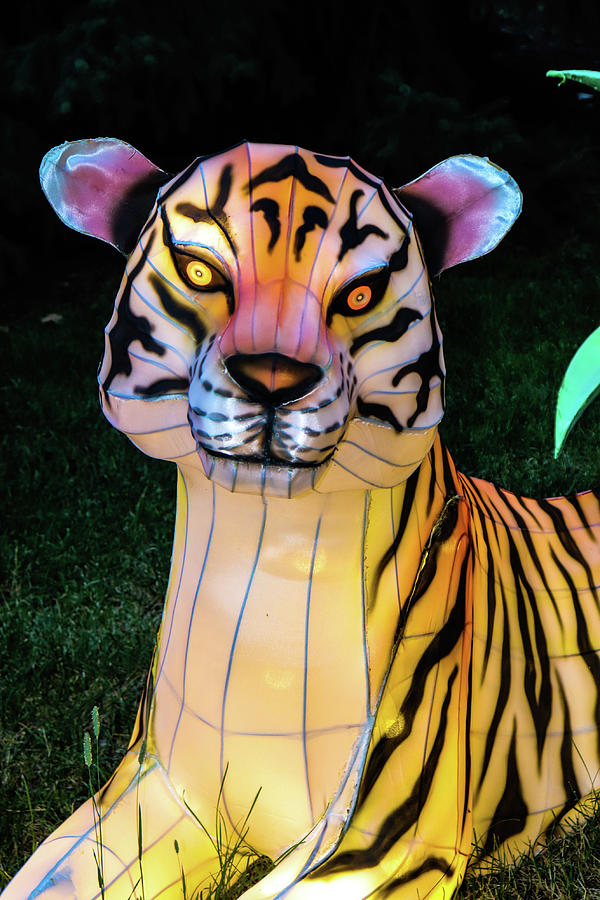 Lighted Tiger by Ron Roberts