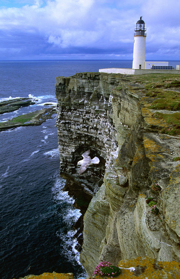 Lighthouse And Cliffs At Noup Head Rspb by Gareth Mccormack