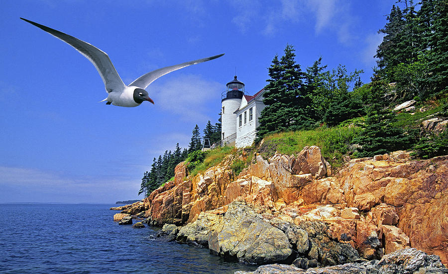 Lighthouse In Acadia National Park, Maine Photograph