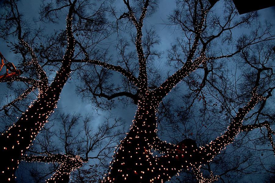 Lightings On Zelkova Tree Photograph by Jun Okada