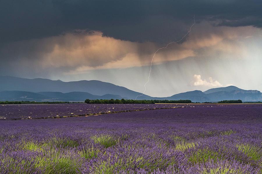 Lightning over Lavender Field by Rob Hemphill