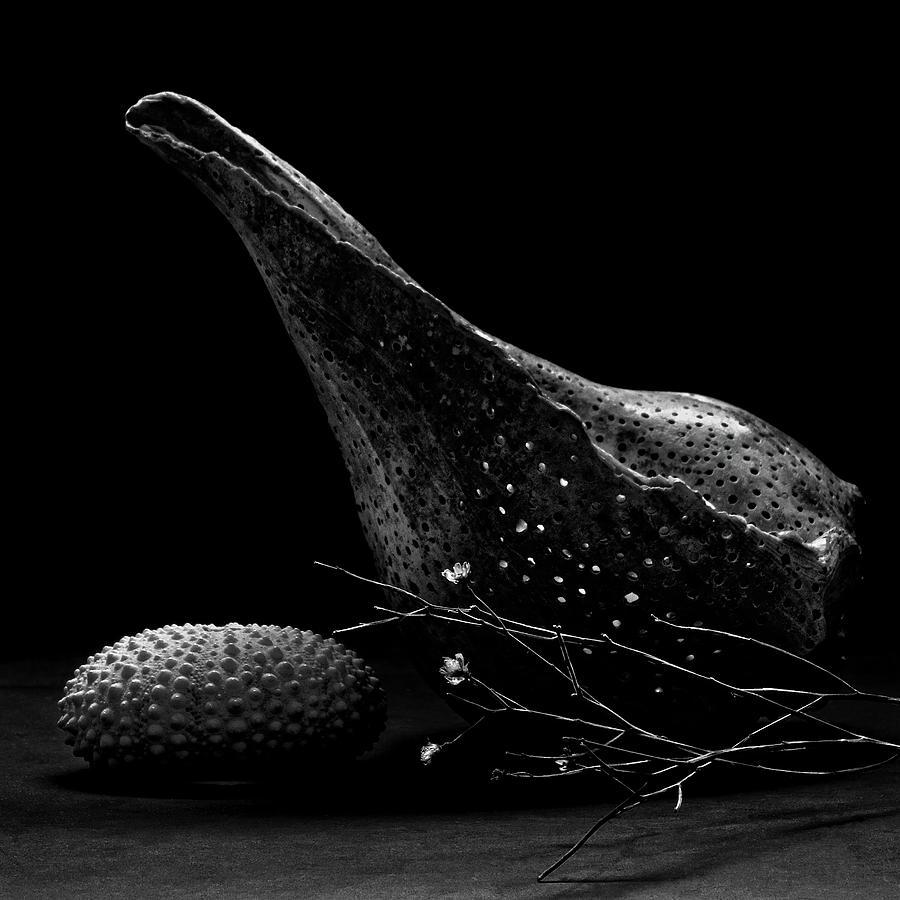 Lightning Whelk and Urchin Shell by Richard Rizzo