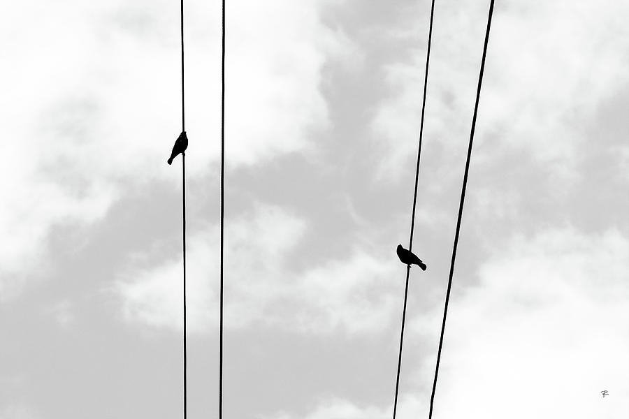 Like A Bird On A Wire by Tom Romeo