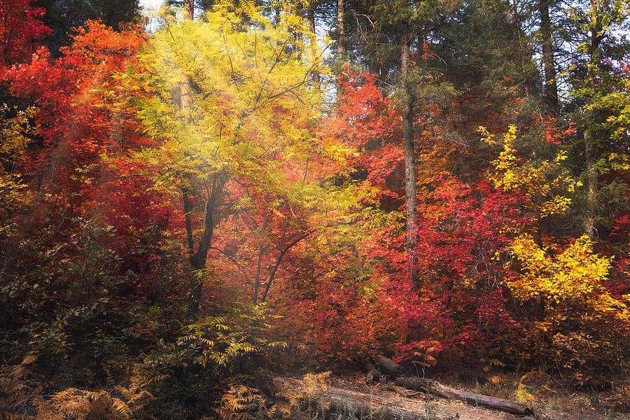 Like A Fantasy Forest  by Saija Lehtonen