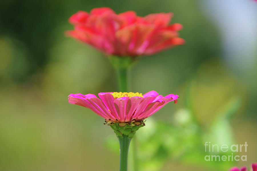 Flower Photograph - Like A Gold Filled Chalice by Jeff Swan