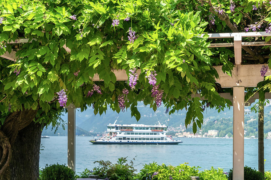 Like a Picture in a Picture - Framing the Bellagio Ferry in Blooming Wisteria by Georgia Mizuleva
