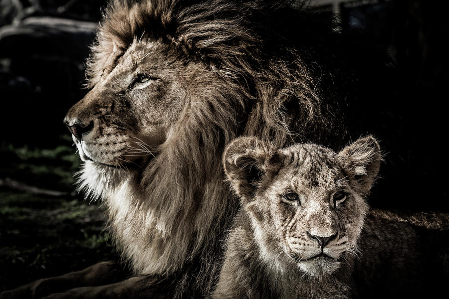 Like Father, Like Son by Ron Pate