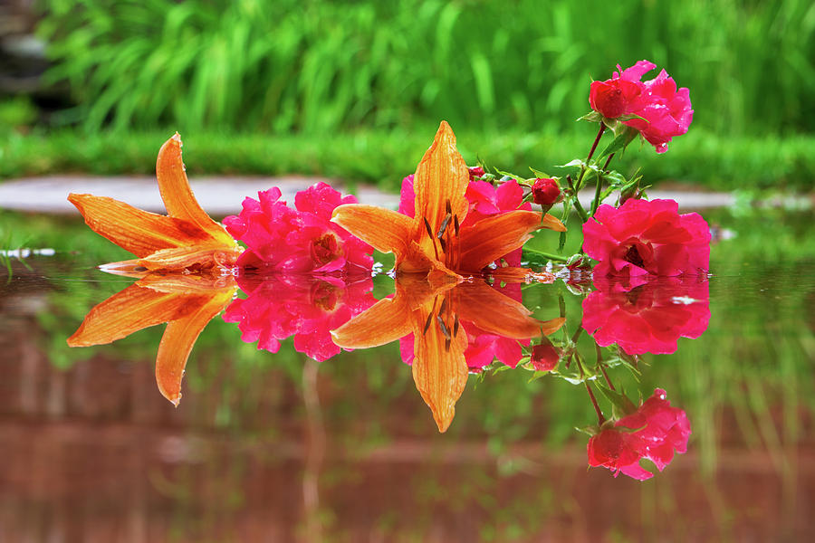 Lilies and Roses Reflection by Jason Fink