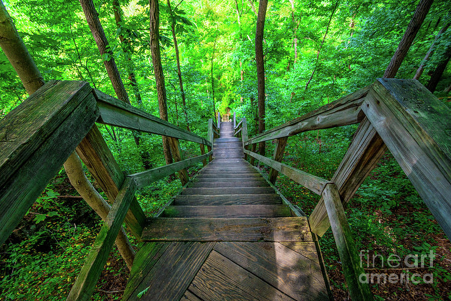 Lilly Memorial Stairway - Clifty Falls State Park - Indiana by Gary Whitton
