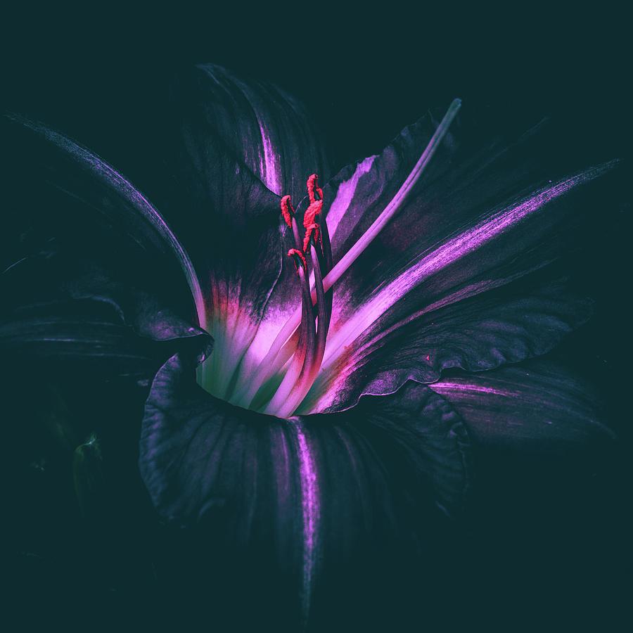 Lily by Bob Orsillo