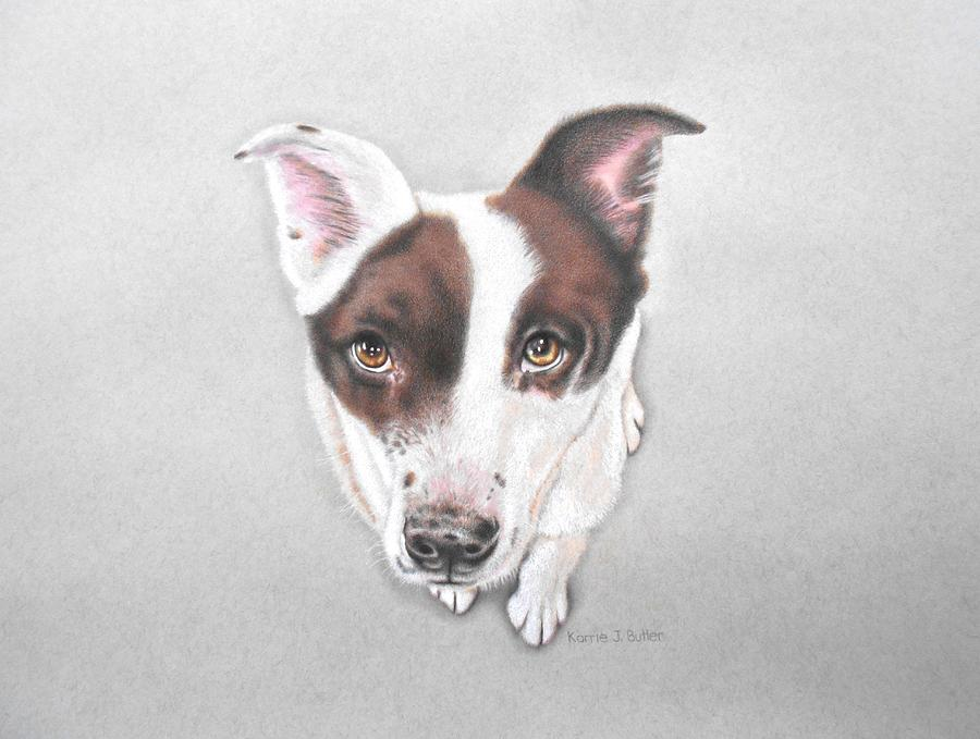 Dog Drawing - Lily by Karrie J Butler