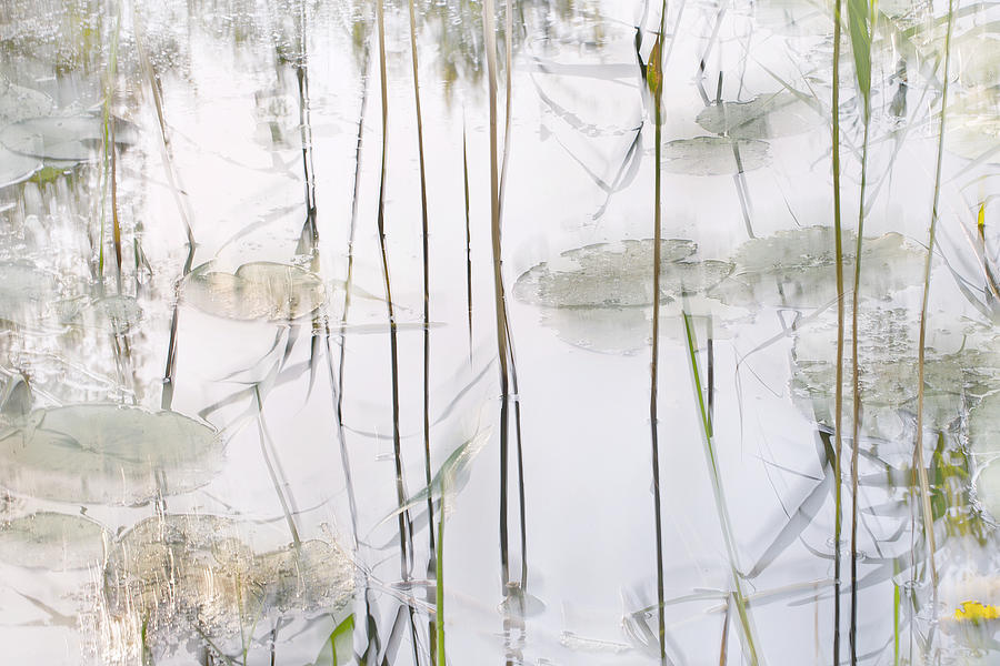 Ditch Photograph - Lily Leaves by Nel Talen