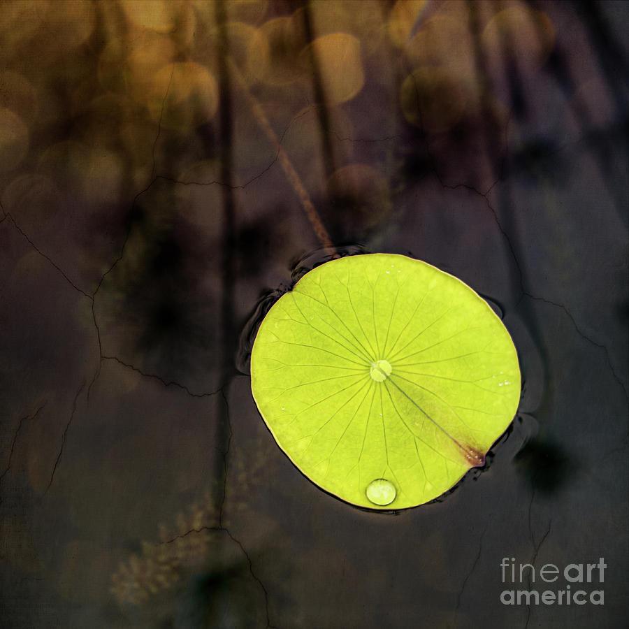 Lily Pad Digital Art