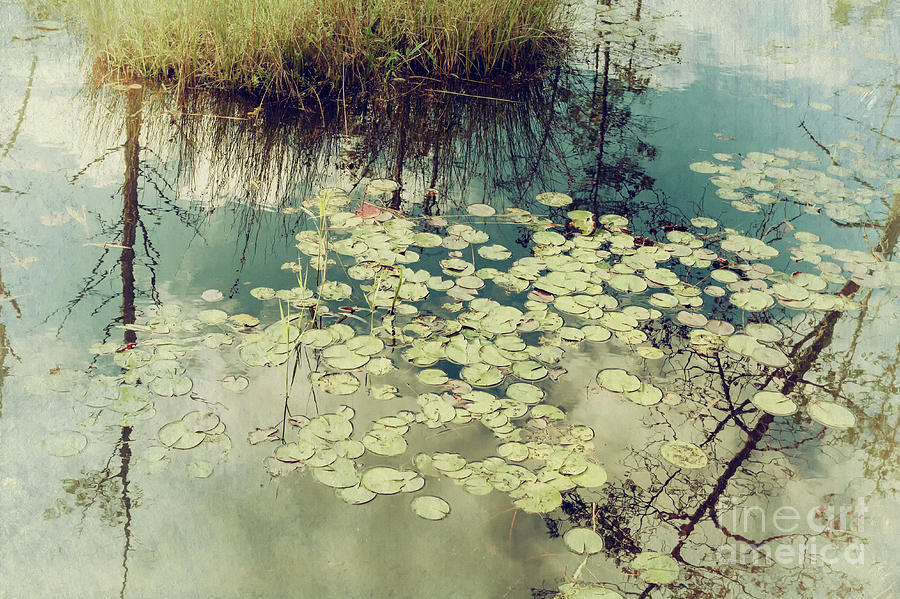 Lily Pads by Debra Fedchin