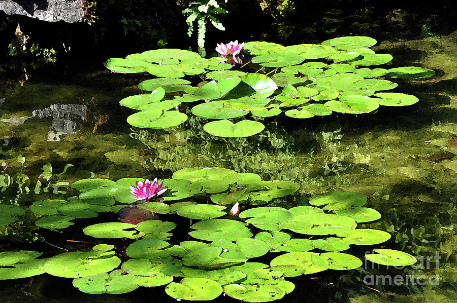 Lily Pads by Kirt Tisdale