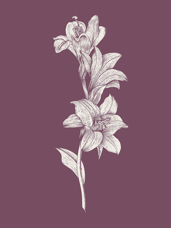 Lily Mixed Media - Lily Purple Flower by Naxart Studio