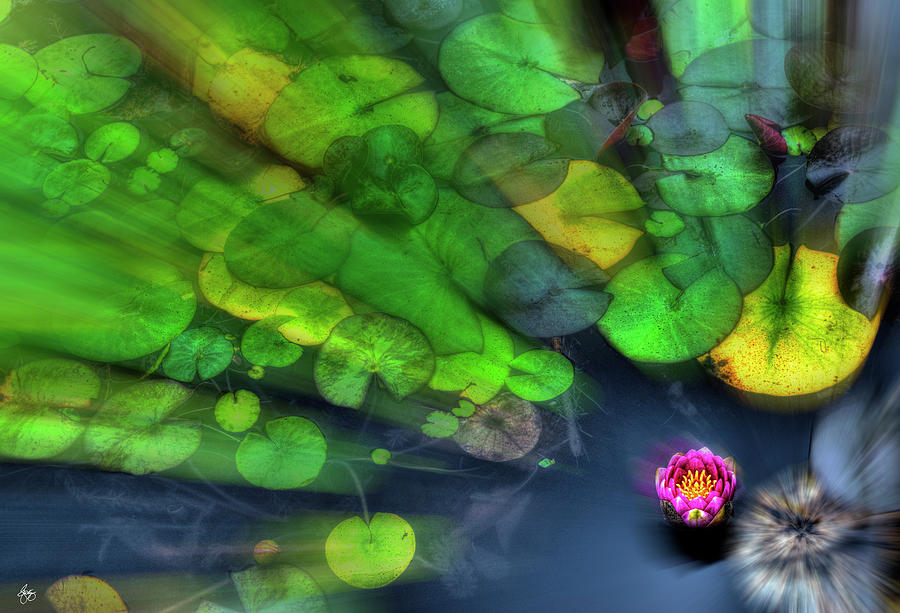 Lily Rush by Wayne King