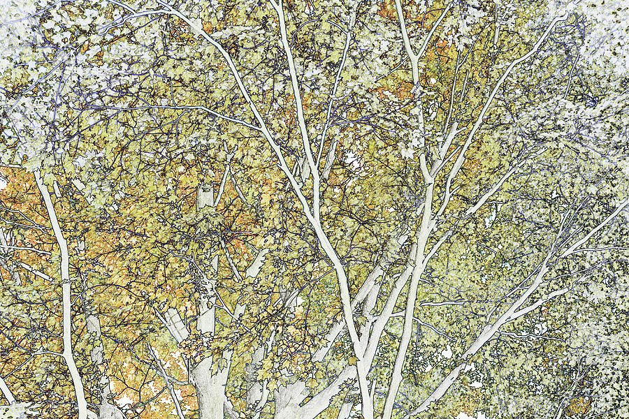 Line Drawing Of Foliage, Leaves And Digital Art by Michael Duva