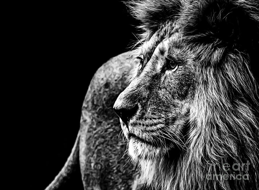 Big Photograph - Lion In Black And White by Joerg Huettenhoelscher