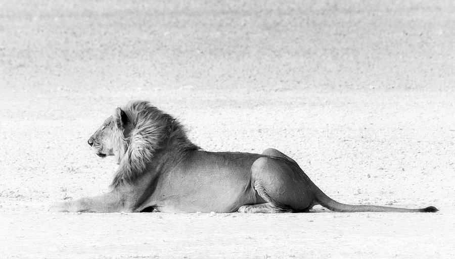 LION IN WAIT by RAND