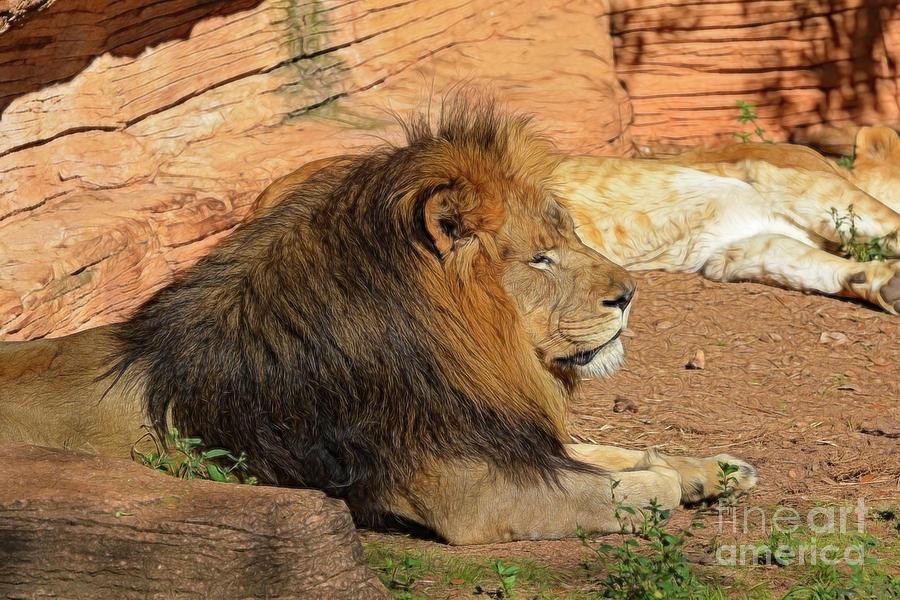 Lion King by Kathy Baccari