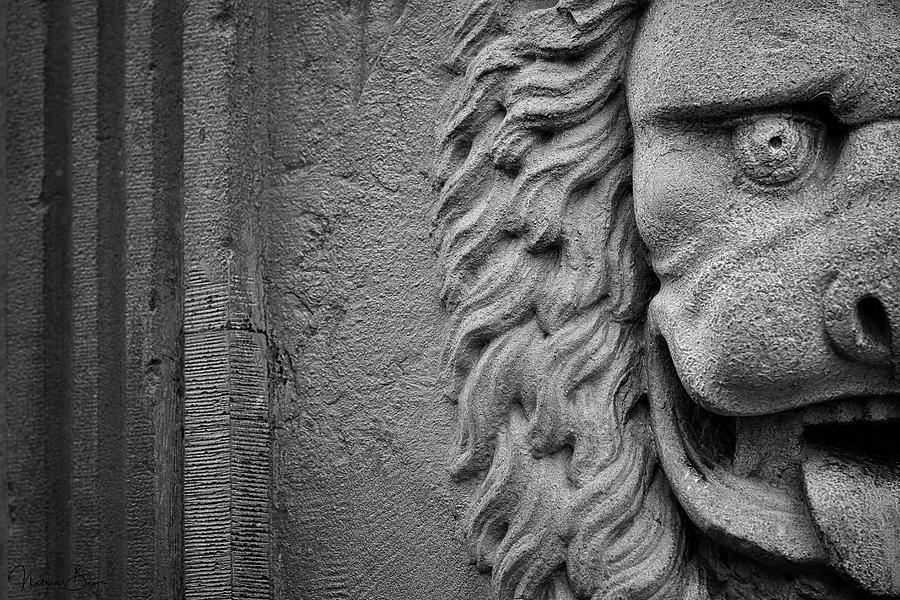 Lion Statue Portrait by Nathan Bush