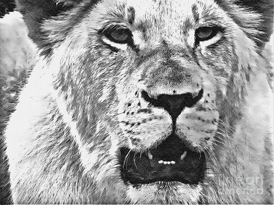 Lioness in Black and White by Jurgen Huibers