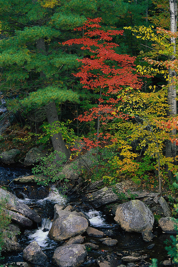 Liqas092 Fall Scenic, Acadia Np, Maine Photograph by Elizabeth Delaney