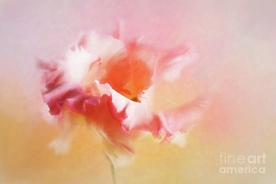Lisianthus Blush by Ann Garrett