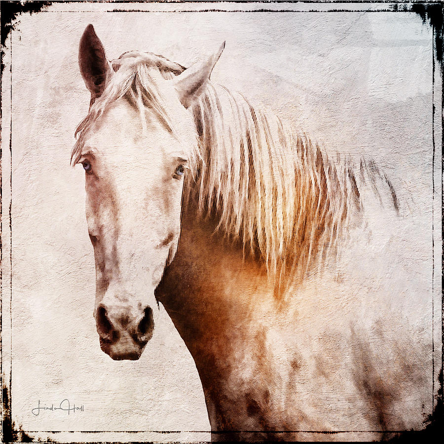 Horse Digital Art - Listening by Linda Lee Hall