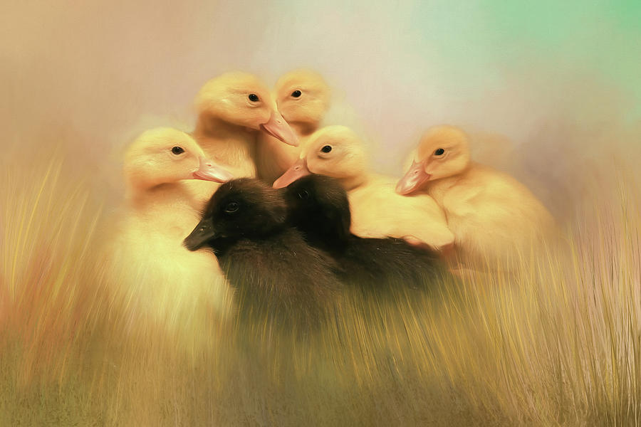 Ducklings Photograph - Little Baby Ducks by Donna Kennedy