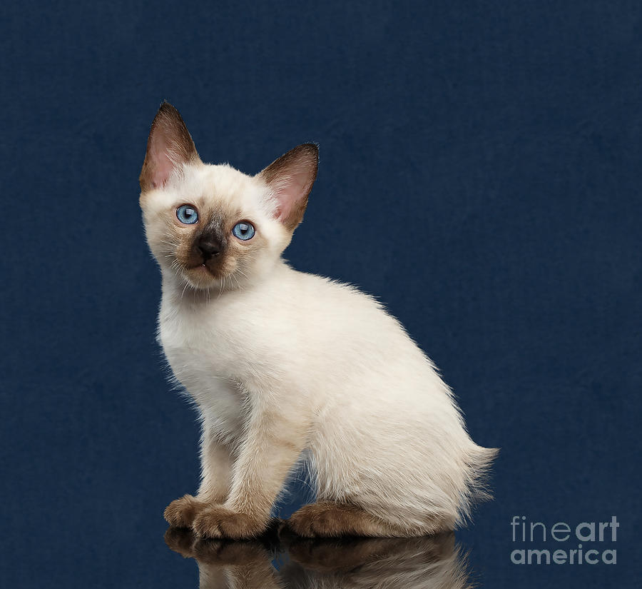 Little Blue Eyes by Cynthia Leaphart