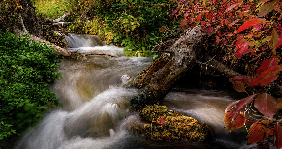Little Deer Creek Autumn by TL Mair