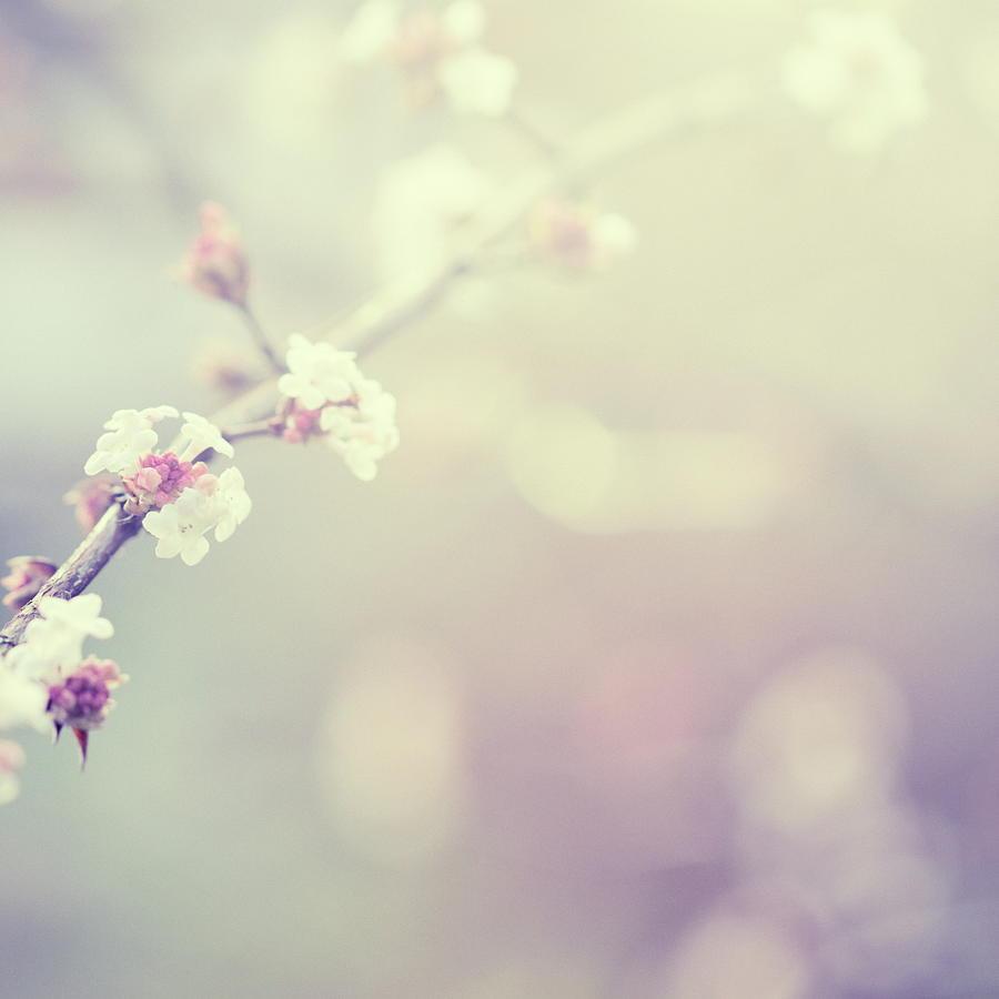 Little Flowers In Winter Photograph by Rike