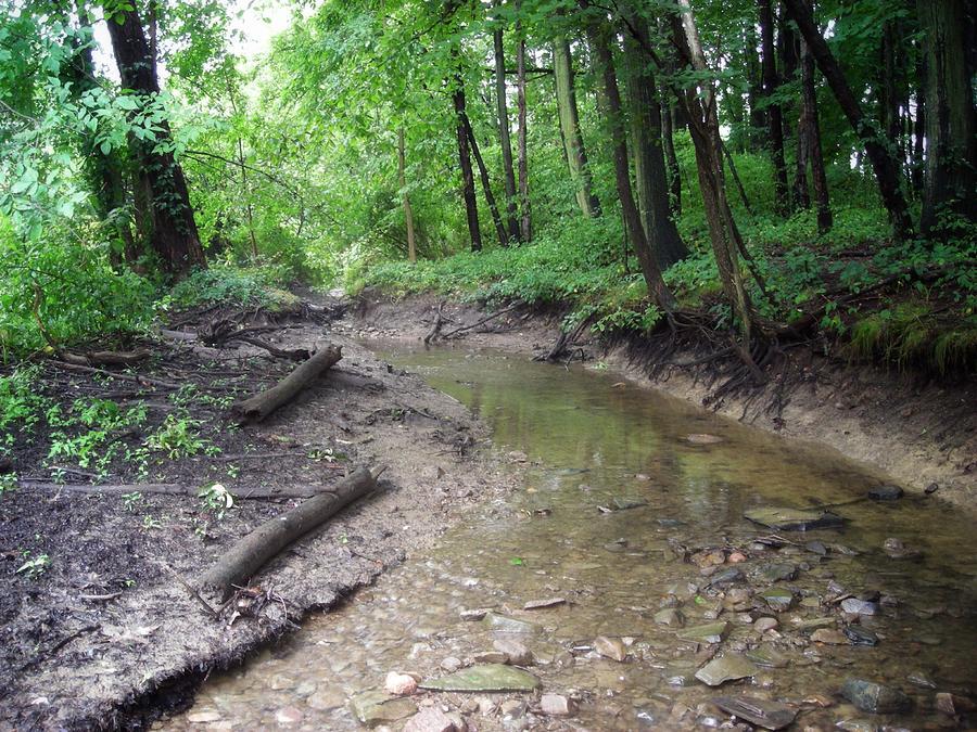 Little Forest Stream Photograph
