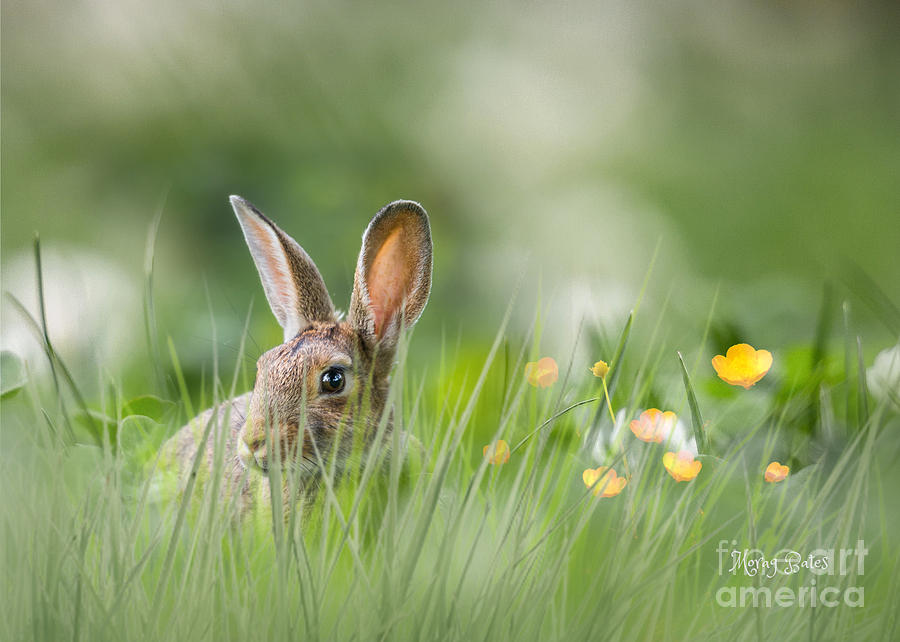 Little Hare by Morag Bates