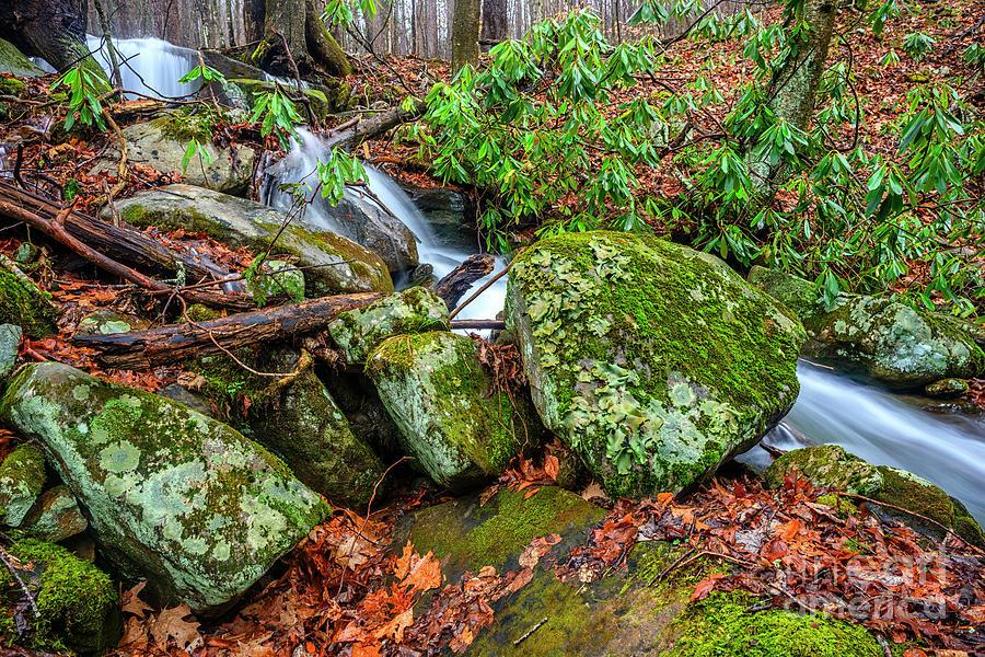 Little Laurel Branch Falls by Thomas R Fletcher