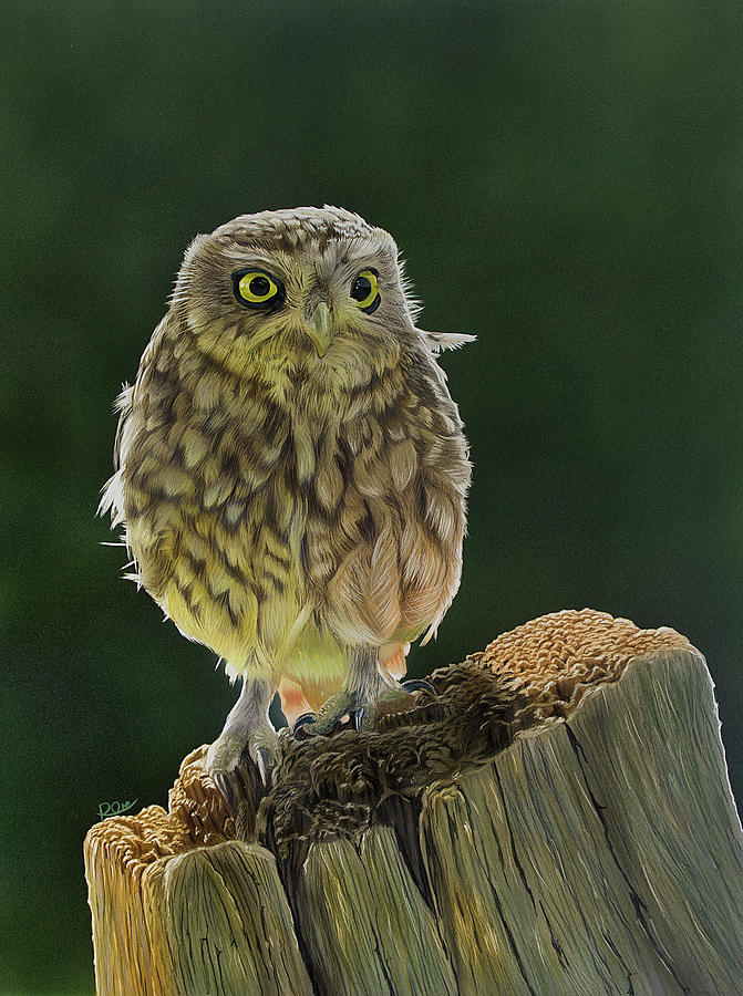 Little Owl Painting - Little Owl by Raymond Ore