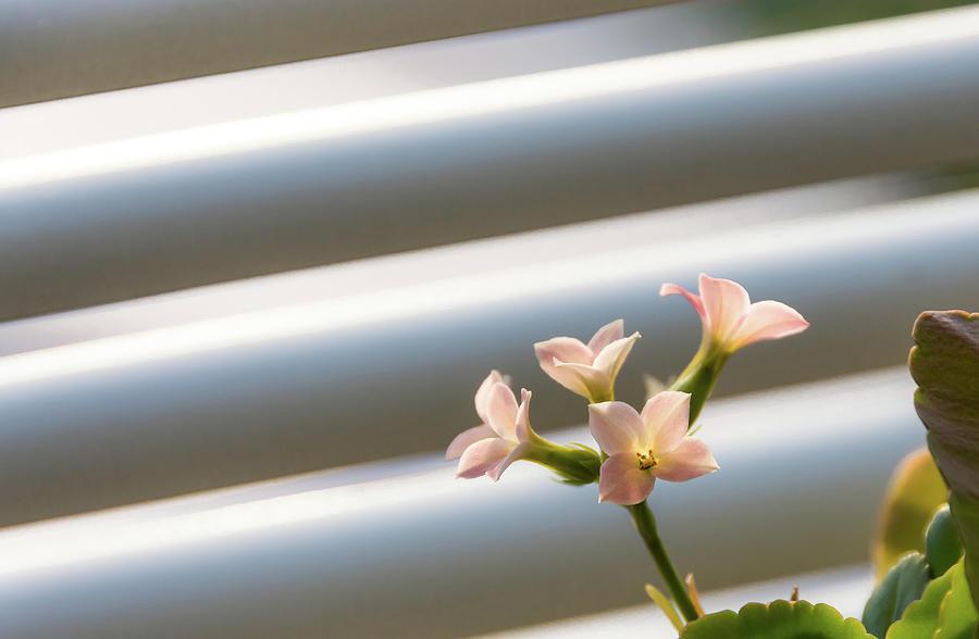 Little pink flowers by Scott Lyons