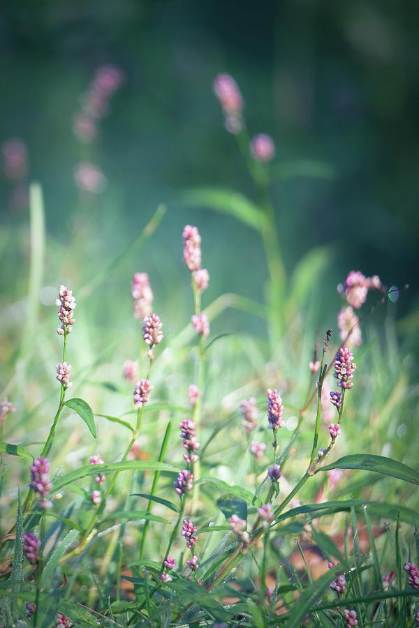 Little Purple Flowers by Lauri Novak